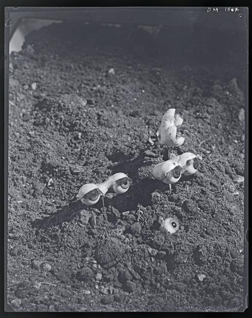 Dora Maar -Les Yeux, serie photomontage c.1932-1935
