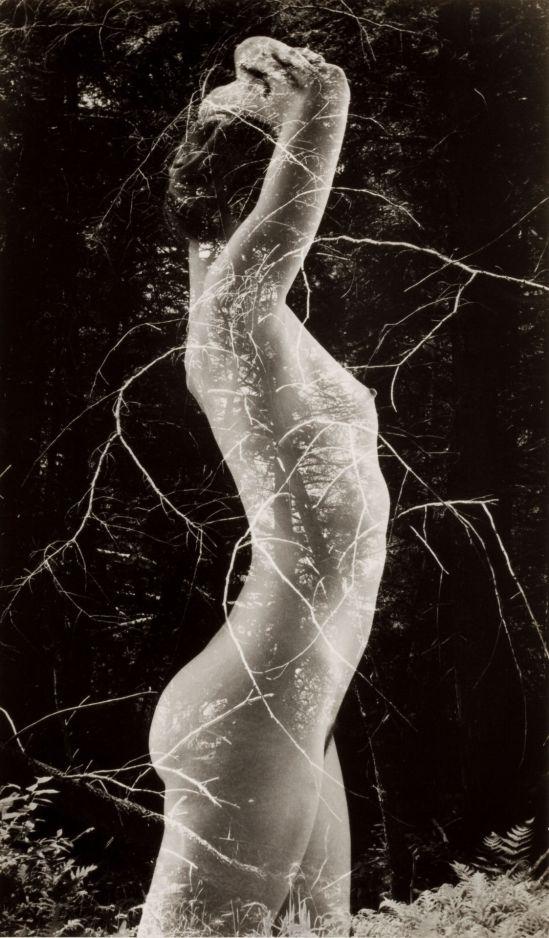 Ruth Bernhard- Symbiosis, 1971
