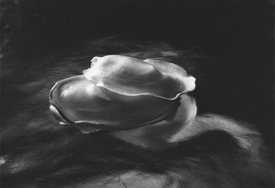 Ruth Bernhard- Candy, 1942