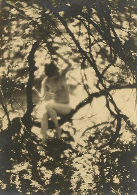 Charles J. Cook - Female Nudes In Forest , 1927