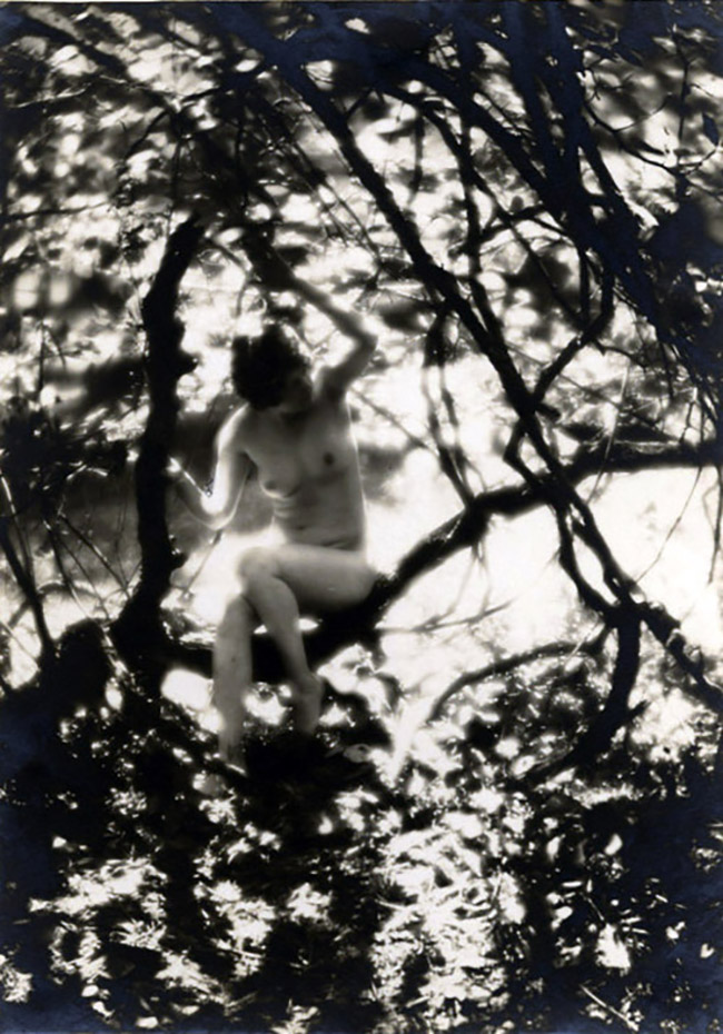 Charles J. Cook - Female Nudes In Forest, 1927