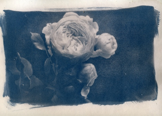 Anders Schildt-rose-2009