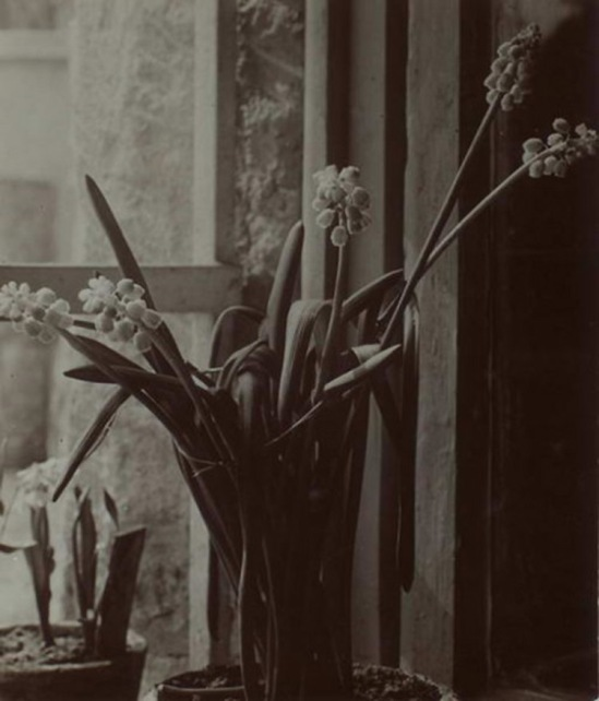 Máté Olga Cserepes virág, Potted Flower 1910-20