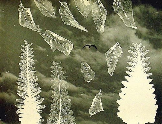 Olive Cotton- [Bird with Photogram of Leaf Skeletons], c1935
