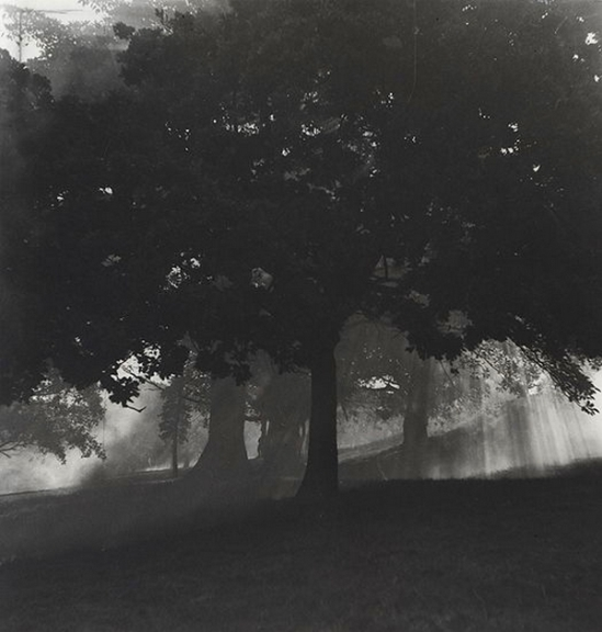 Olive Cotton - Smoke Through The Trees, c1940