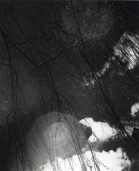 Olive Cotton-  Willow Rain 1940