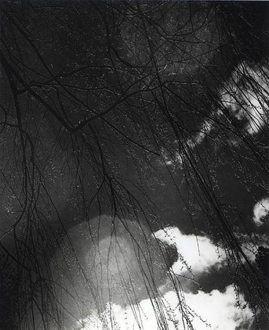Olive Cotton-  Willow Rain 1940