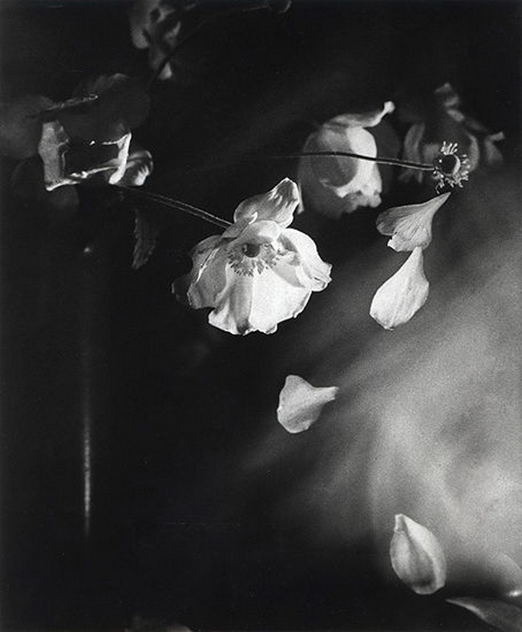 Olive Cotton-  Windflowers 1939