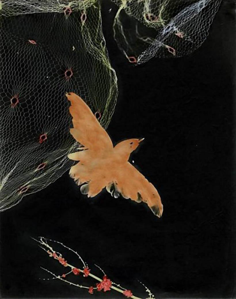 Josef Breitenbach- Bird, Photogram, hand colored gelatin silver print, 1948 © The Josef Breitenbach Trust
