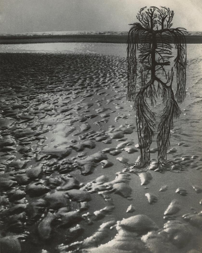 Josef Breitenbach-Untitled , human circulatory system diagram, wet beach sand with high sea horizon,  1942 © The Josef Breitenbach Trust