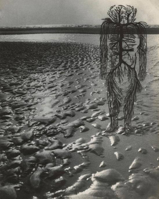 Josef Breitenbach-Untitled , human circulatory system diagram, wet beach sand with high sea horizon,  1942 © The Josef Breitenbach Trust
