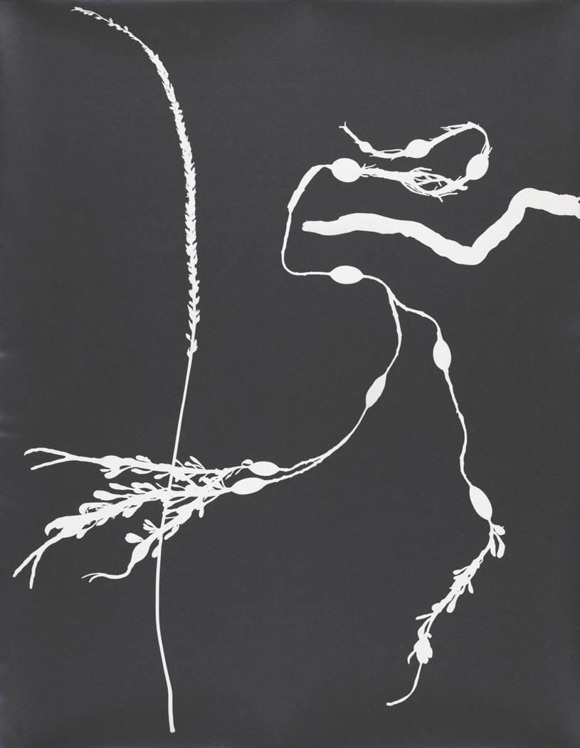 Josef Breitenbach-Untitled , photogram, 1940s  © The Josef Breitenbach Trust