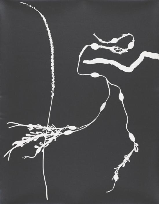 Josef Breitenbach-Untitled , photogram, 1940s  © The Josef Breitenbach Trust