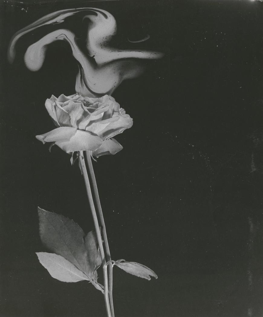 Josef Breitenbach- Fragrance of a Pink Rose, 1945,New York , Gelatin silver print © The Josef Breitenbach Trust.