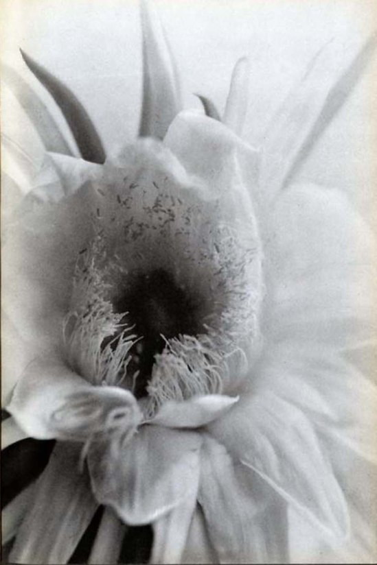 Nell Dorr- -Bloom close-up from In a Blue Moon, Nell Dorr 1939
