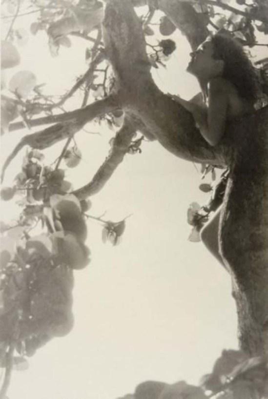 Nell Dorr- Nude in tree, 1929