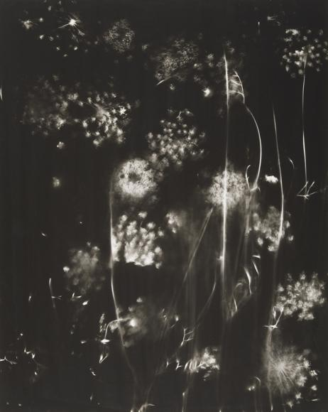 Nell Dorr-[Wild flowers view fourteen], n.d.