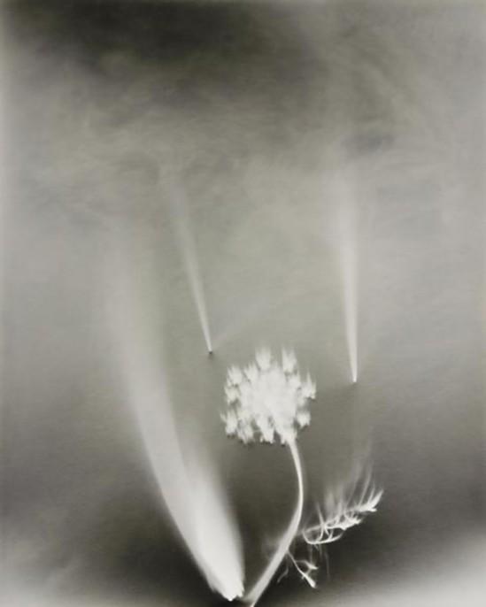 Nell Dorr-Wild flowers view seventeen], n.d