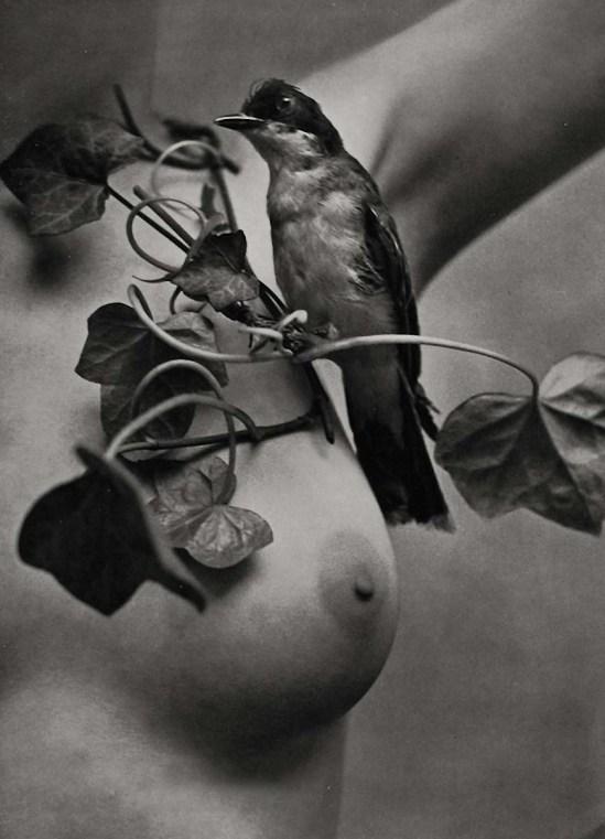 Zoltan Verre nue avec Bird, 1950
