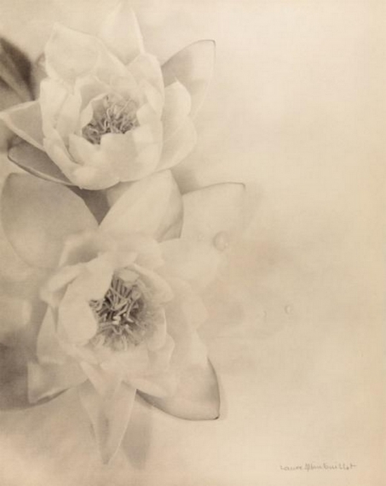 Laure Albin Guillot - Fleurs, 1930