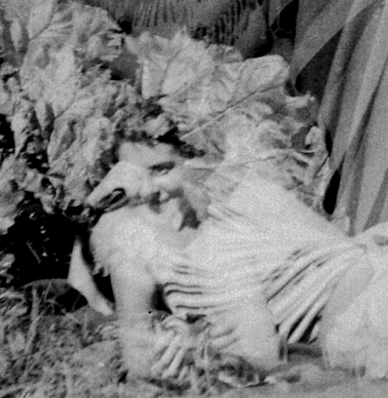Marcel G. Lefrancq -le regne vegetal 1938