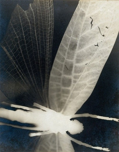 Curtis Moffat, 'Abstract Composition', About 1925 © Victoria and Albert Museum, London/Estate of Curtis Moffat To make this striking image of a dragonfly, Moffat placed the specimen in the photographic enlarger head (in place of a negative) and projected the image onto