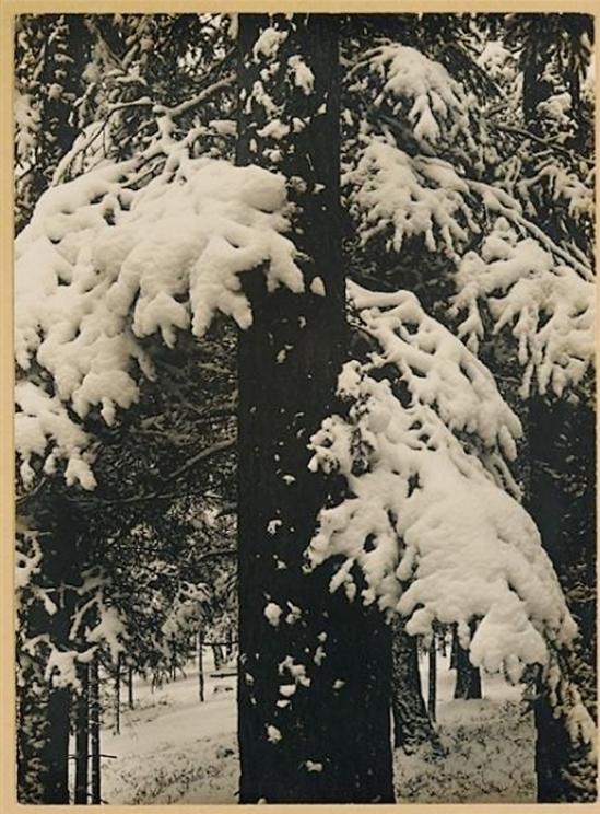 Aenne Biermann- winter, 1931