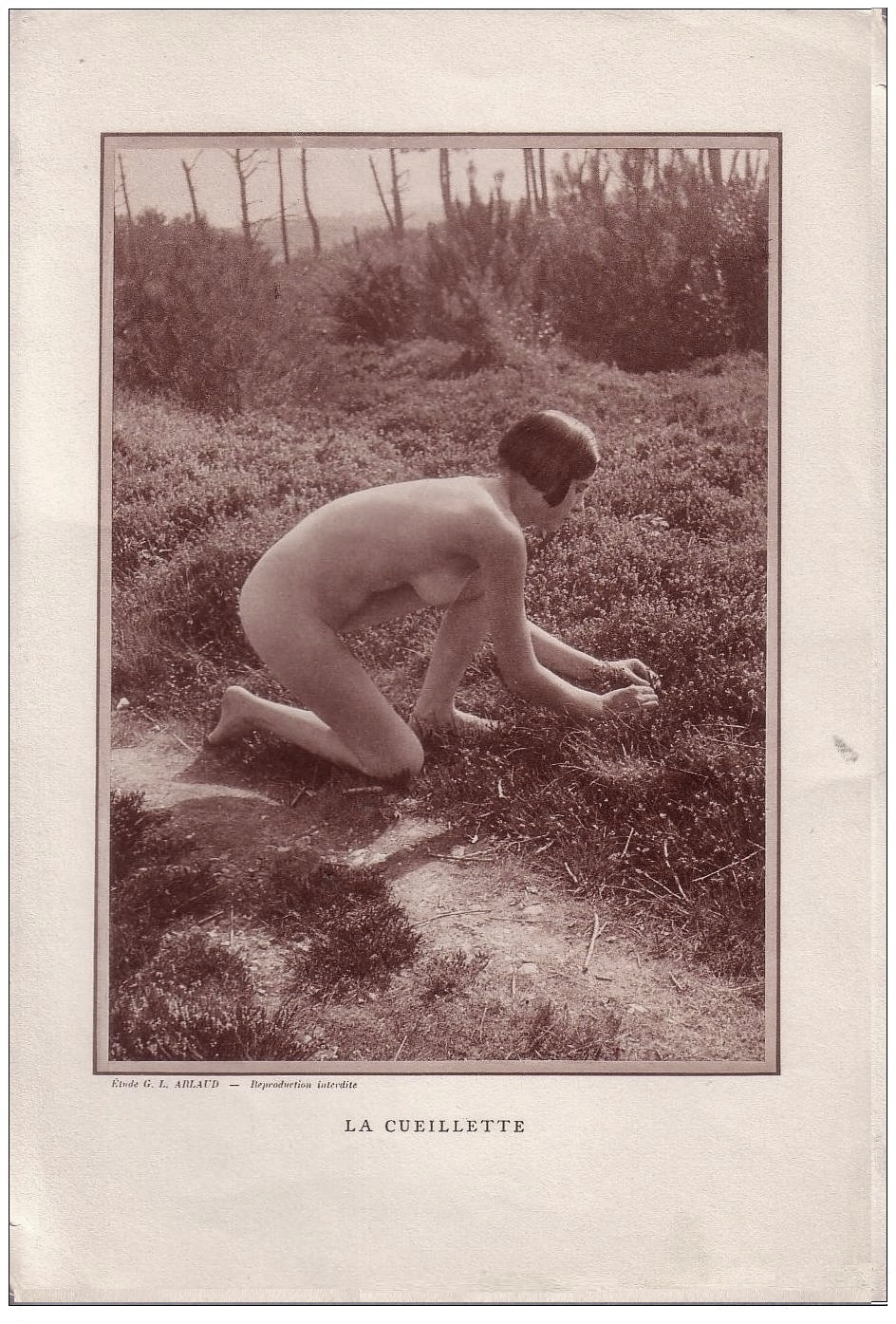 Etude G. L Arlaud - La Cueillette, 1930
