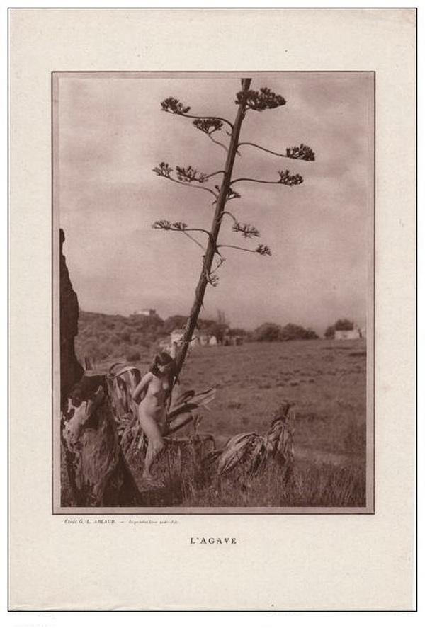 Etude G. L Arlaud -l'Agave, nu érotique 1930