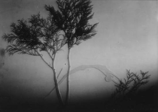 František Drtikol- Untitled (cut-out nude with tree) c.1930-1935 ( photomontage)