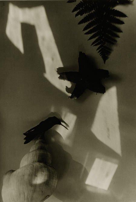 Jaromir Funke  Shell, Starfish, Fern, Bird, 1930