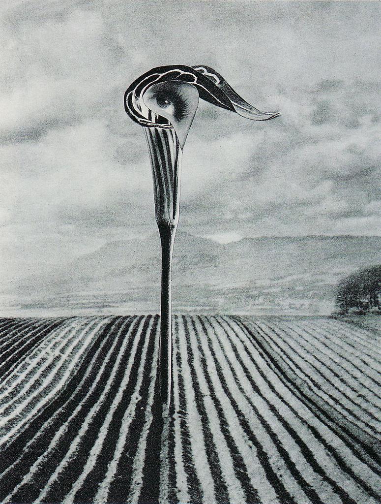 Karel Teige - Collage #325 , 1947