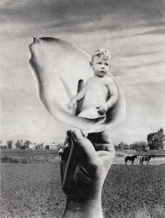 Grete Stern. Niño flor. El niño de los sueños. Idilio número 10. 1948