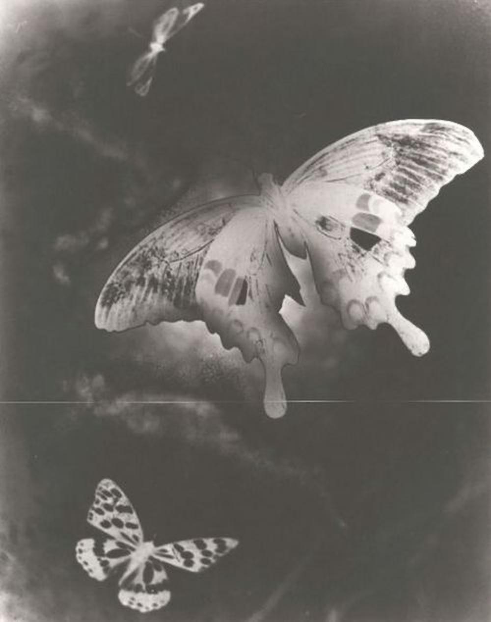 Iwata Nakayama- Butterfly , 1941