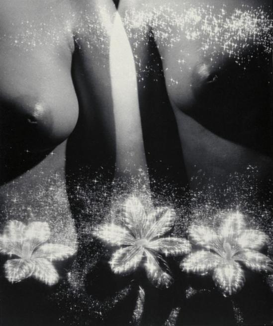 Yasuzo Nozima- Ginreika (Loosestrife) 1941