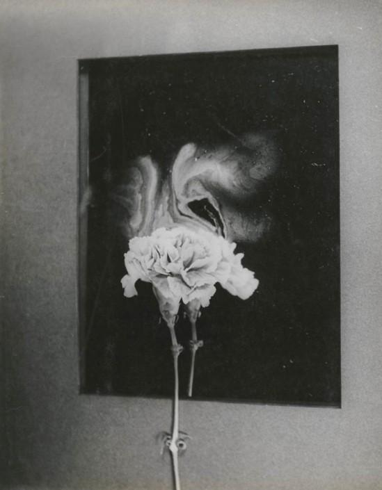 Josef Breitenbach-Carnation and Fragrance, 1940s  ,gelatin silver print, 1948 © The Josef Breitenbach Trust.