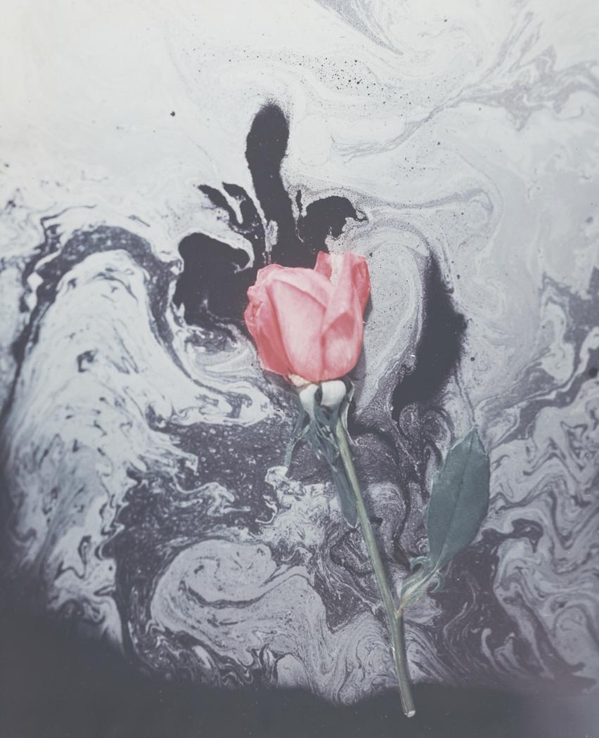 Josef Breitenbach- Red Rose and Odor, 1940 ,Unknown color process © The Josef Breitenbach Trust