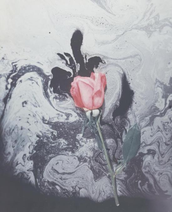 Josef Breitenbach- Red Rose and Odor, 1940 ,Unknown color process © The Josef Breitenbach Trust