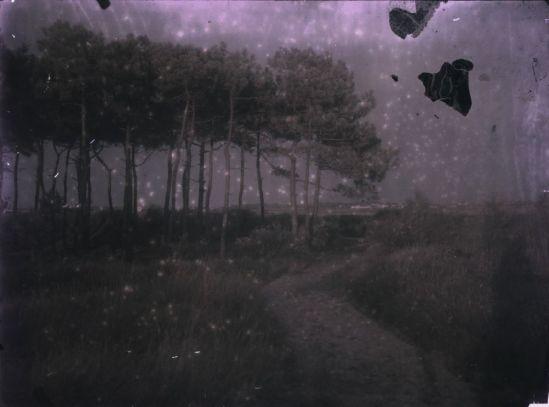 Ernest-Louis Lessieux - Les pins, paysage de l'île d'Oléron apres 1907 Autochrome © Alienor org, Le musée de l'île d'Oléron